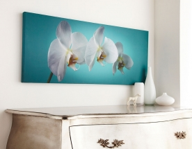 Obraz Orchideje 40-615, Teal orchid, Wall Art, Graham Brown